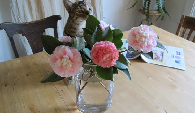 RRR_cat_and_the_flowers_blog